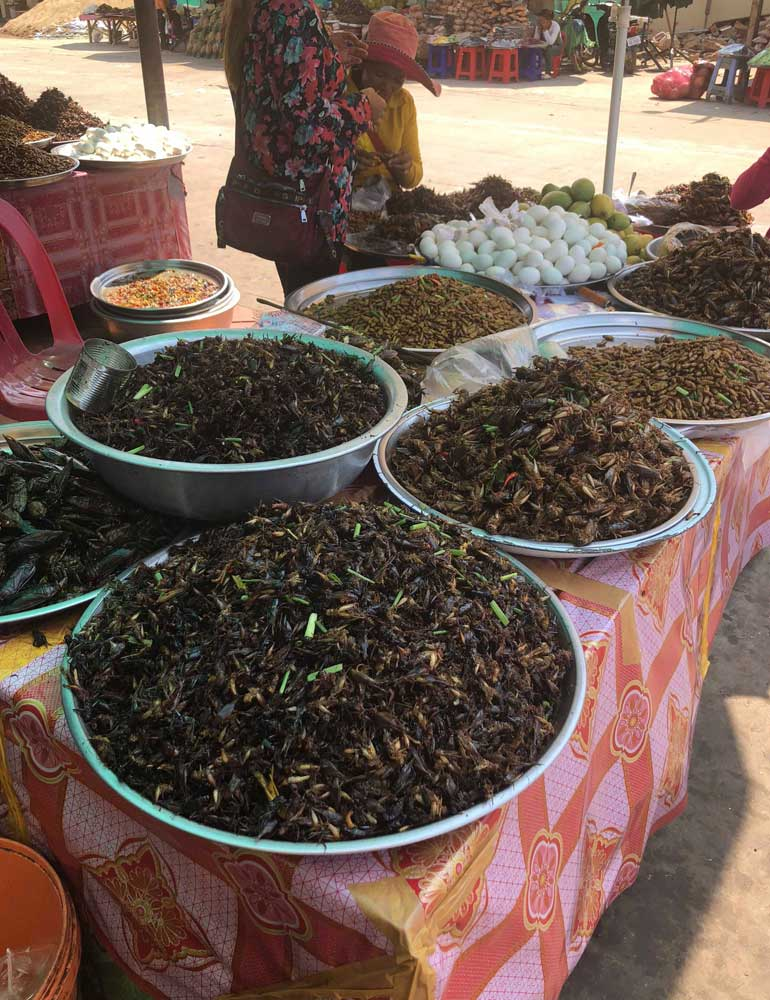 Table of edible bugs in Cambodia