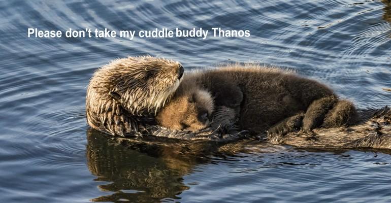 Sea otters cuddling