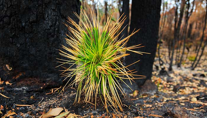 Australian bush regrowth
