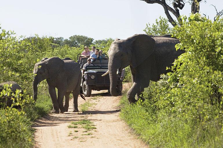 South Africa wildlife tour elephants