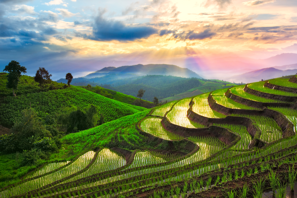 Rice fields in country Thailand